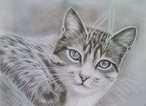 Gato para dibujar A LAPIZ , Imagui