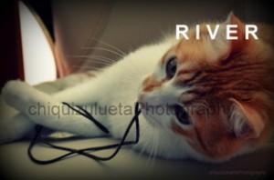 Gatito en adopcion, River 1