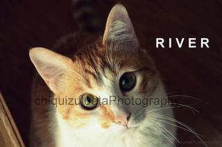 gatito en adopcion, River 2