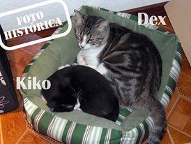 Dex y Kiko 2