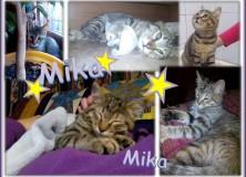 Mika comp