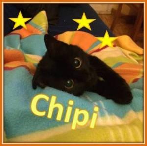 CHIPI web